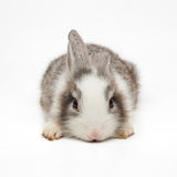 Cute little bunny. Isolated on white background Stock Images