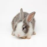 Cute little bunny Royalty Free Stock Photos