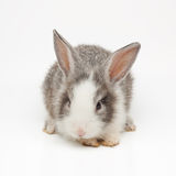 Cute little bunny. Isolated on white background Stock Photos