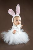 Cute little bunny looking up Royalty Free Stock Image
