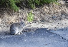 Cute Little Bunny out in Nature stock photo