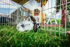Cute little bunny in an outdoor compound, green grass. Little bunny is sitting in an outdoor compound. Green grass, spring time rabbit cute enclosure easter stock image