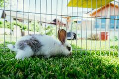 Cute little bunny in an outdoor compound, green grass. Little bunny is sitting in an outdoor compound. Green grass, spring time rabbit cute enclosure easter stock photo