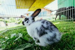 Cute little bunny in an outdoor compound, green grass. Little bunny is sitting in an outdoor compound. Green grass, spring time rabbit cute enclosure easter stock photos
