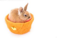 Cute little bunny rabbit isolated on a white background Stock Images