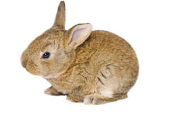 Cute little bunny shot from aside Royalty Free Stock Image