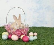 Easter Bunny Puppy Stock Photos