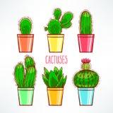 Cute little cactuses Stock Photos
