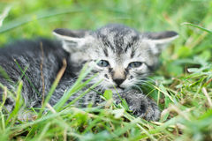 Cute little cat Royalty Free Stock Photos