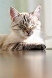 Cute little cat enjoying the sun Stock Photo