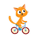Cute little cat, kitten character riding bicycle, cycling, holding handlebar. Cute little cat, kitten character riding bicycle, cycling, cartoon vector Royalty Free Stock Image
