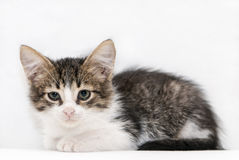 Cute Little Cat Royalty Free Stock Photo