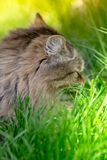 Cute little cat lay outside on green spring grass. Backlit. Cute little cat lay oute on green spring grass. Back lit royalty free stock photography