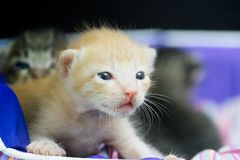 Cute little cat looking at camera. Close up cute  little cat looking at camera Royalty Free Stock Image