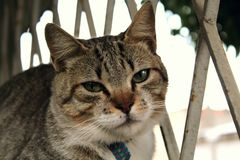 A cute little cat, Love cat, close up. Amazing pet Royalty Free Stock Images