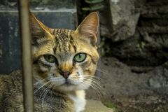 A cute little cat, Love cat, close up Royalty Free Stock Photos