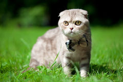 Cute little cat on the nature stock photo