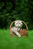Cute little cat on the nature Royalty Free Stock Image