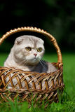 Cute little cat on the nature Royalty Free Stock Photo