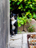 Cute little cat peeking out and look form the niche glimpse with Stock Photography