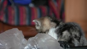 Cute little cat playing stock video footage