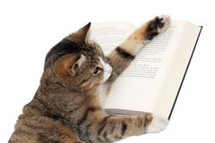 Cute little cat reading a book. On white Royalty Free Stock Photography