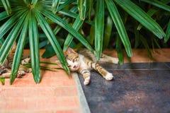 Cute little Cat sleep Royalty Free Stock Photos