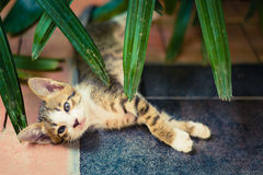 Cute little Cat sleep Stock Images