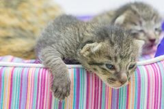 Cute little cat sleeping. Close up cute little cat sleeping Royalty Free Stock Image