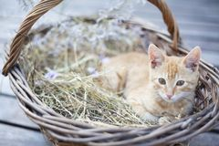 Little cat in wicker basket stock photos