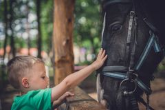 Cute little boy and a horse stock photography