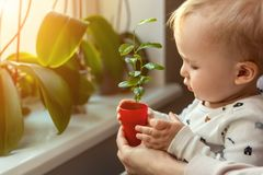 Cute little caucasian toddler boy with mother smiling and having fun holding pot with planted flower near window sill at stock photo