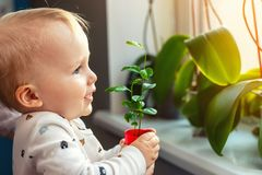 Cute little caucasian toddler boy with mother smiling and having fun holding pot with planted flower near window sill at royalty free stock photo