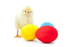 Cute little chick Stock Photos