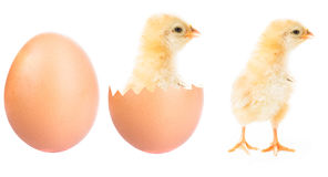 Cute little chick Stock Image