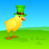 Cute little chick wear leprechaun hat Royalty Free Stock Photos