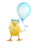 Cute little chicken with balloon Stock Images