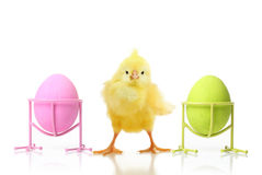Cute little chicken and Easter eggs Royalty Free Stock Photos