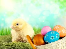 Cute little chicken with gold eggs on background Stock Photography