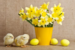 Cute little chicks and easter eggs Royalty Free Stock Image