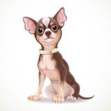 Cute little chihuahua dog wearing a collar vector illustration Stock Photography