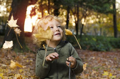 Cute little child with blonde curly hair enjoying in the park. In autumn at sunset, watching falling leaves Royalty Free Stock Photography