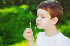 Cute Little child blowing dandelion. Cute Little boy blowing dandelion Stock Photo