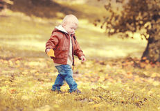 Cute little child boy walking in autumn day stock photos