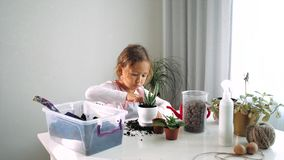 Little child girl replant a flower at home, indoor stock video footage