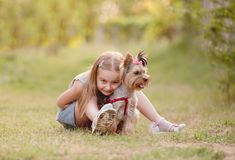 Child girl with her little Yorkshire terrier dog in the park royalty free stock photography