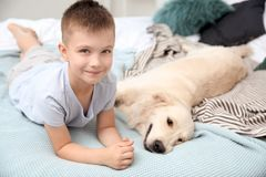 Cute little child with his pet on bed. At home royalty free stock photography