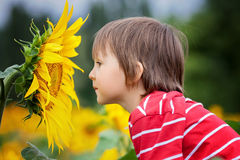 Cute little child, holding big sunflower flower in a field. Summertime Royalty Free Stock Images