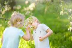 Cute little children playing together in blooming cherry garden royalty free stock images