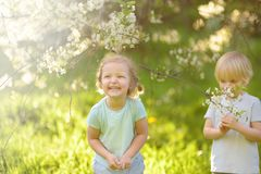 Cute little children playing together in blooming cherry garden stock image